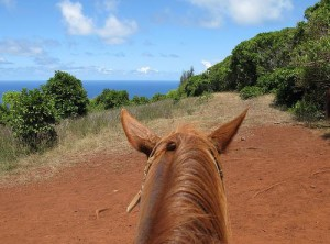 Horseback riding in Maui photo by Drongowski and flickr.com