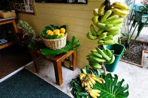 Fresh fruit daily at Dolphin Bay Hotel