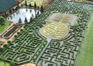 Pineapple-Garden-Maze