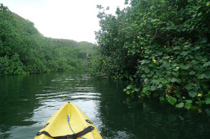 Kayak the Wailua River