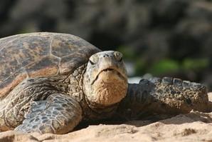 Save The Sea Turtles International